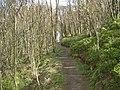 Pathway - geograph.org.uk - 163438.jpg