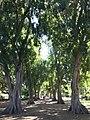Pathway in City Botanic Gardens, Brisbane, Queensland.jpg