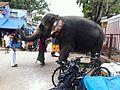 Pazhani Temple Elephant.jpg
