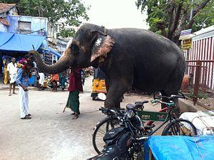 Palani Murugan temple - Pazhani Temple Elephant
