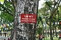 Peltophorum pterocarpum-Ho Chi Minh City (1).jpg