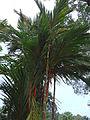 Penang Botanic Gardens (44).JPG