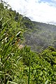 Perspektiven des Parque nacional Iguazú 17 (21493038164).jpg