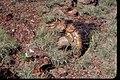 Petrified Wood at Petrified Forest National Park, Arizona (8b879ef6-1925-4e12-878e-eeff5d3a3df6).jpg