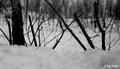 Photograph of Rabbit Snare - NARA - 2128308.tif