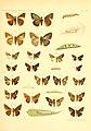 Piepers and Snellen Rhopalocera of Java Plate VII.jpg