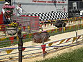 Pig racing at 2008 San Mateo County Fair 5.JPG