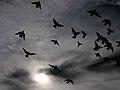 Pigeons Sky Sun.jpg