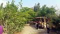 PikiWiki Israel 36727 Botanical - Eilat.JPG