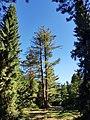 Pinetum birkhoven - 1.jpg