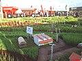 Plantações em miniatura e ao fundo a Agrishow Ribeirão Preto - panoramio.jpg