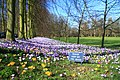 Please keep off the crocuses - geograph.org.uk - 1186856.jpg
