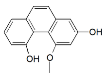 Chemical structure of plicatol B