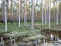 Pludi 2011 - panoramio.jpg