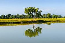 Pond of Kuruwapari Chaudharitol- Inaruwa, Kosi Municipality-WLV-2252.jpg