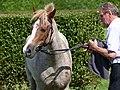 Poney français aubère, Guillac.jpg