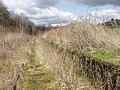 Porthywaen Halt, near Llynclys - geograph.org.uk - 155442.jpg