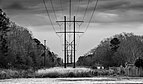 Power lines during Blue Hour BW.jpg