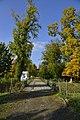Près d'un arbre à feuillage dorée (22801606873).jpg