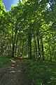 Prírodná rezervácia Borsukov vrch, Národný park Poloniny (13).jpg