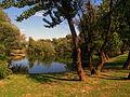Preserved old trees Bundek2.jpg