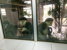 Primates in the Endangered Primate Rescue Center, Cuc Phuong National Park