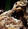 Prosaurolophus.jpg
