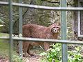 Puma beauval 03.JPG