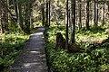 Puszcza Knyszyńska rezerwat przyrody Krzemianka.jpg