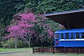 Qilan Forest 04.jpg