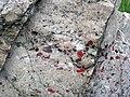 Quartzite & pebbly quartzite with jasper (Lorrain Formation, Paleoproterozoic, ~2.3 Ga; Ottertail Lake Northeast roadcut, near Bruce Mines, Ontario, Canada) 7 (40742955563).jpg