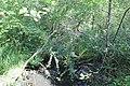 Réserve naturelle Marais Lavours Aignoz Ceyzérieu 111.jpg