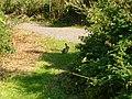 Rabbit in the distance - panoramio.jpg