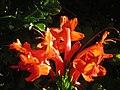 Red Flowers in a Bush.jpg