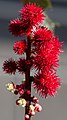 Red and Spikey (8033909241).jpg