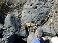 Reworked tar Rozel Point Utah.JPG