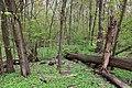 Rezerwat przyrody Las Bielański 2017e.jpg
