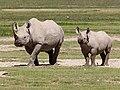 Rhinoceros, Ngorongoro (2015).jpg