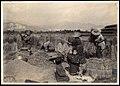 Rice Harvest of Japan (1911 by Elstner Hilton).jpg