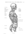 Richer - Anatomie artistique, 2 p. 62.png