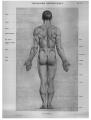 Richer - Anatomie artistique, 2 p. 82.png