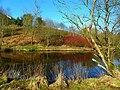 River Camowen - geograph.org.uk - 1728826.jpg
