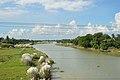 River Damodar - Amta - Howrah 2013-09-22 3132.JPG