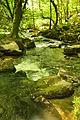 River Fowey above Golitha Falls (4004).jpg