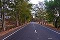 Road via beauty.jpg