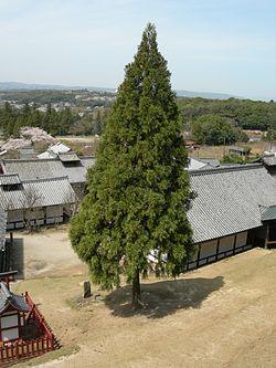 RobenSugi DSCN9003 20100404.JPG