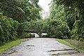 Roman Forest Flood - 4-18-16 (26511794675).jpg