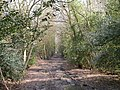 Roman Road Chilworth - April - geograph.org.uk - 477607.jpg