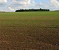 Round Plantation - geograph.org.uk - 248771.jpg