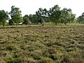 Row Hill, New Forest - geograph.org.uk - 179506.jpg